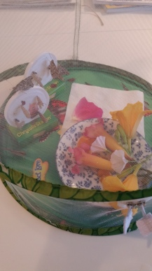assortment of foods for the new emerged butterflies