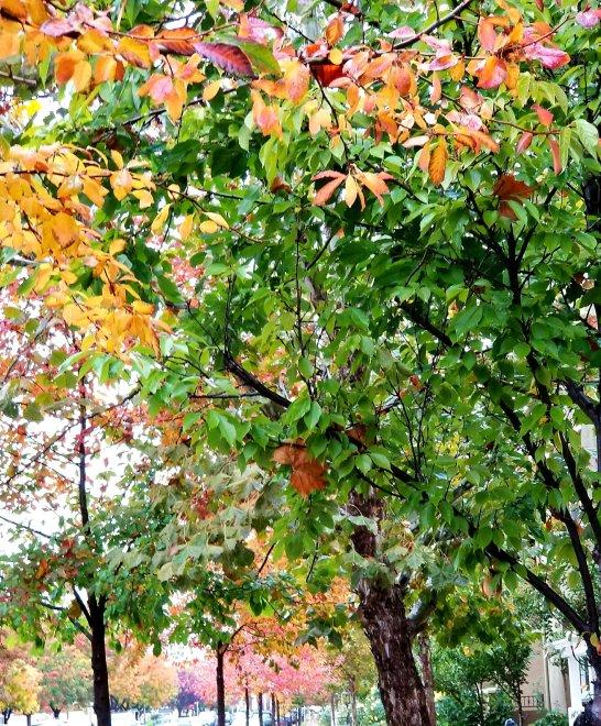 I love fall colors!