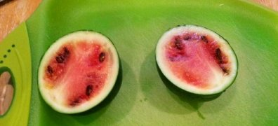 Our crop of 1 mini watermelon