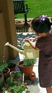 Soaking the plants
