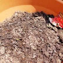 Tomato seeds planted in soil: June 2018