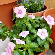 Ellis' plant