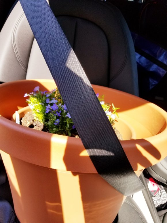 Buckled up our new planter in the car