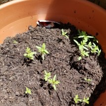 Little sprouts growing