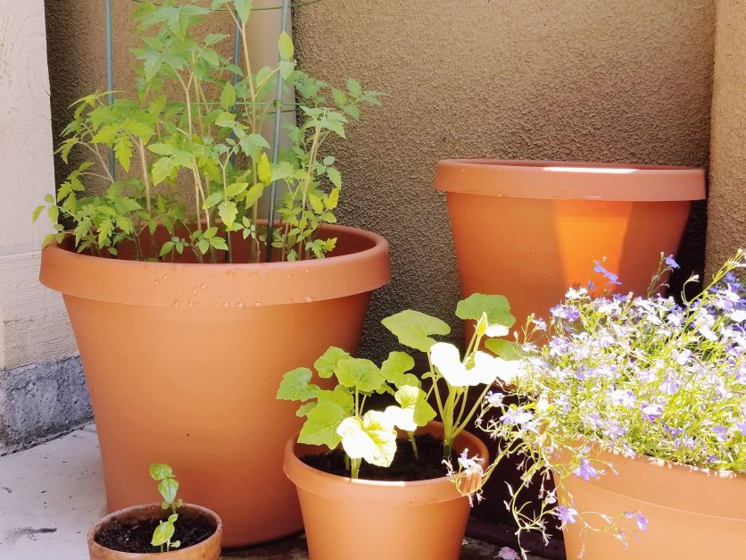 Recent (this afternoon) picture of our plants